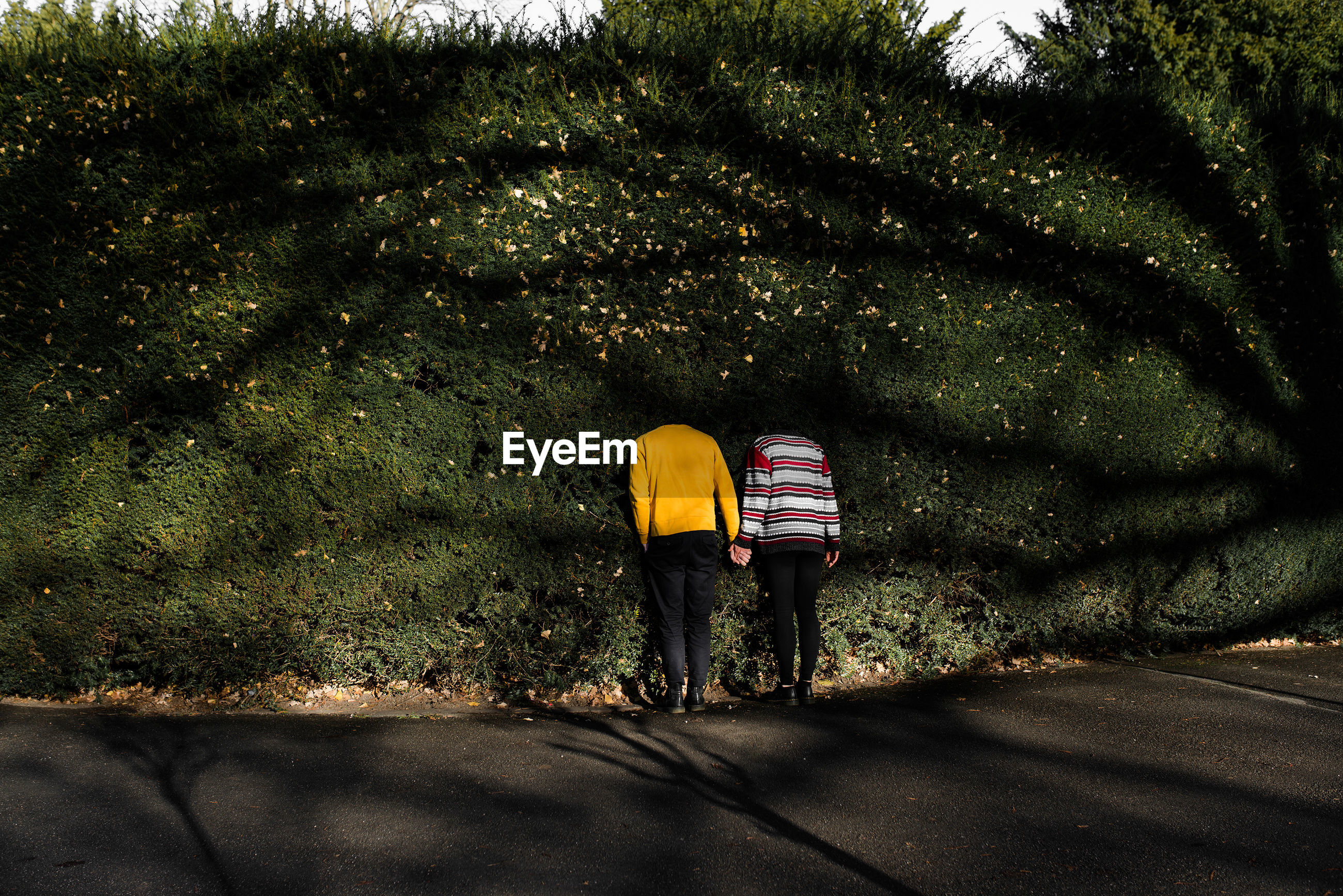 Rear view of friends against bush