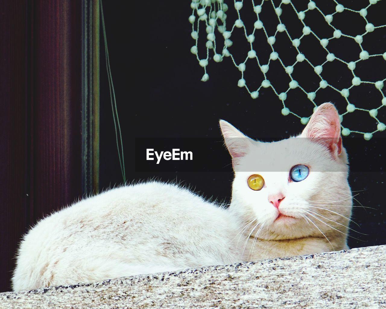 Portrait of cat sitting on windowsill