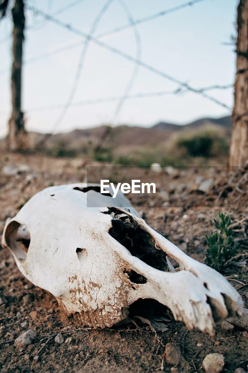Close-Up Of Skull On Field
