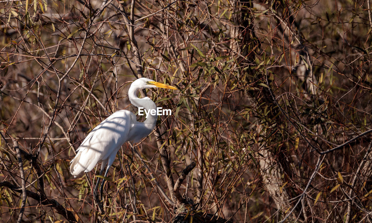 animal themes, animal, bird, animal wildlife, one animal, vertebrate, animals in the wild, tree, no people, plant, nature, day, perching, land, outdoors, forest, egret, heron, branch, focus on foreground