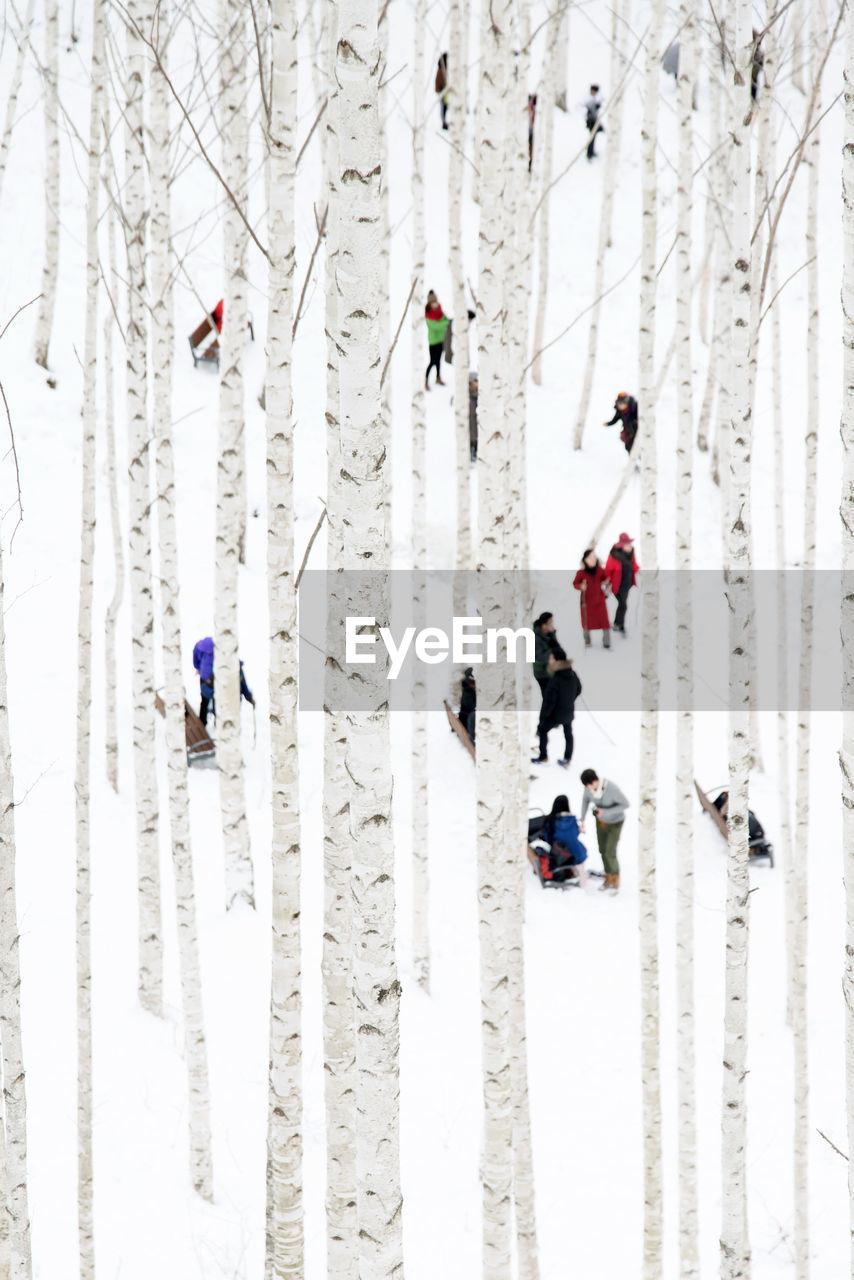 People On Snowy Field Seen Through Tree Trunk
