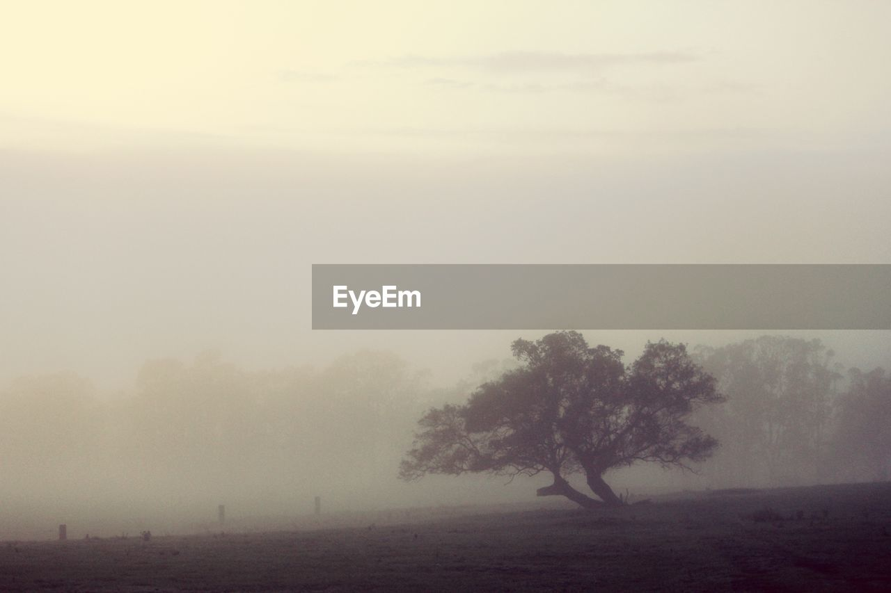 TREES ON FIELD DURING FOGGY WEATHER