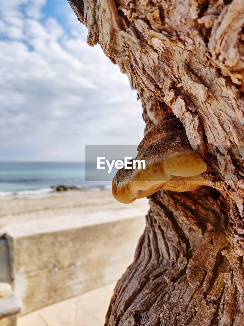nature, sea, beauty in nature, focus on foreground, water, close-up, no people, day, animal wildlife, animal, sky, one animal, tree trunk, textured, trunk, beach, land, tree, animal themes, outdoors