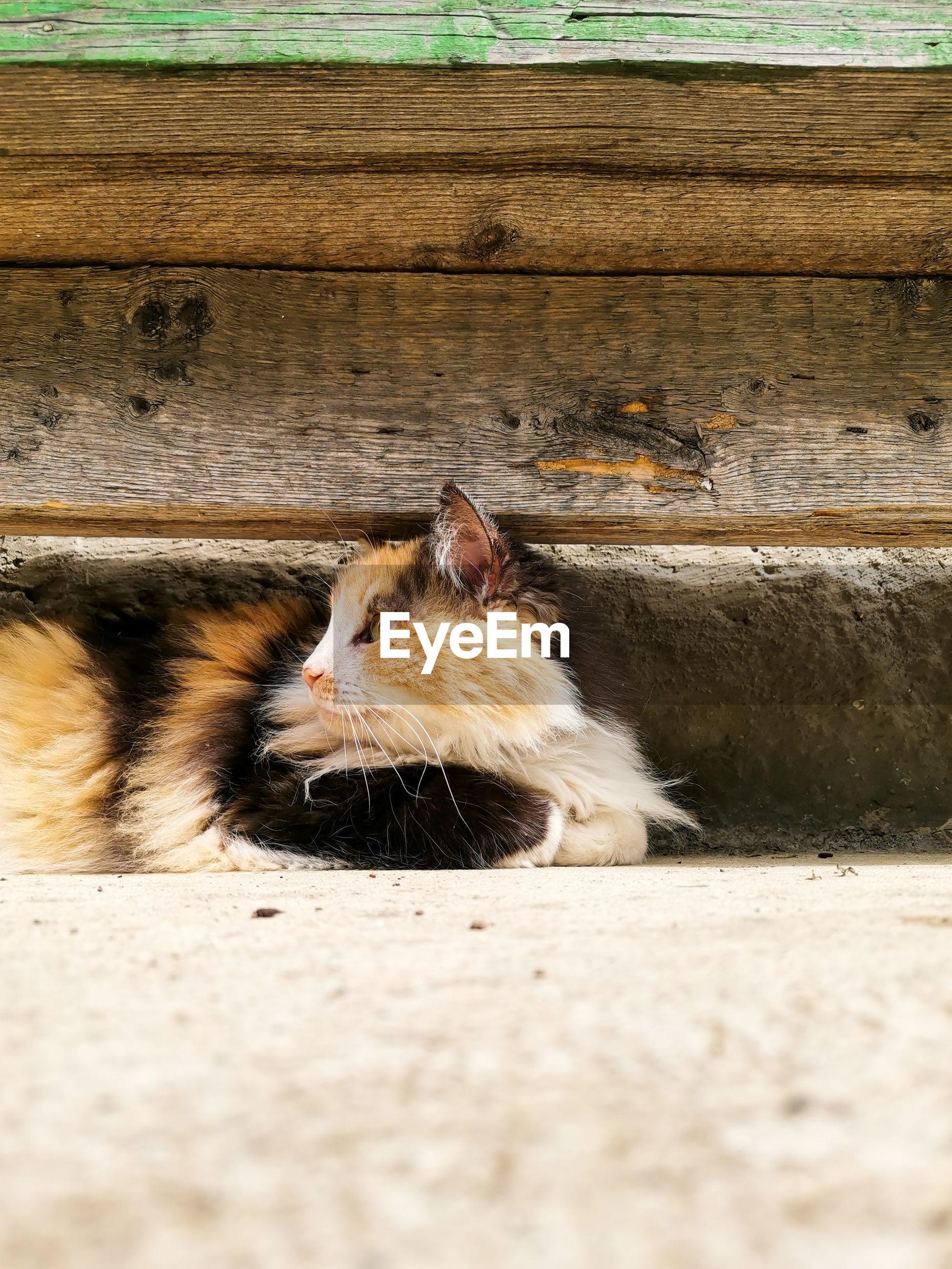 CAT RESTING IN A WOOD
