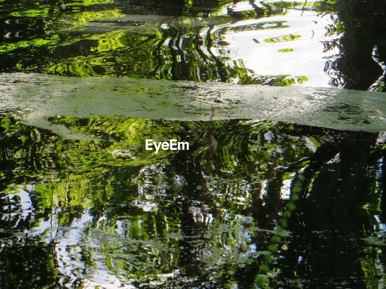 reflection, water, no people, day, green color, outdoors, nature, puddle, close-up, animal themes