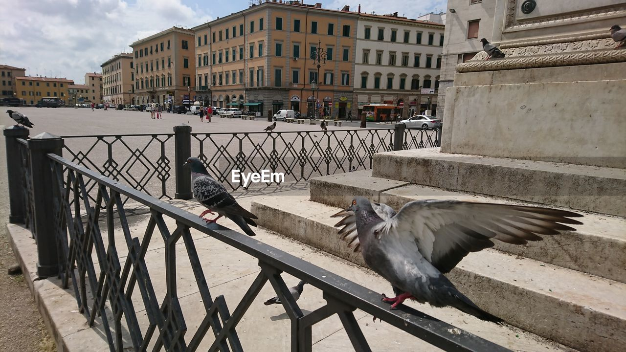 architecture, built structure, building exterior, animal themes, vertebrate, animal, bird, animal wildlife, animals in the wild, railing, one animal, city, day, nature, building, flying, incidental people, spread wings, outdoors
