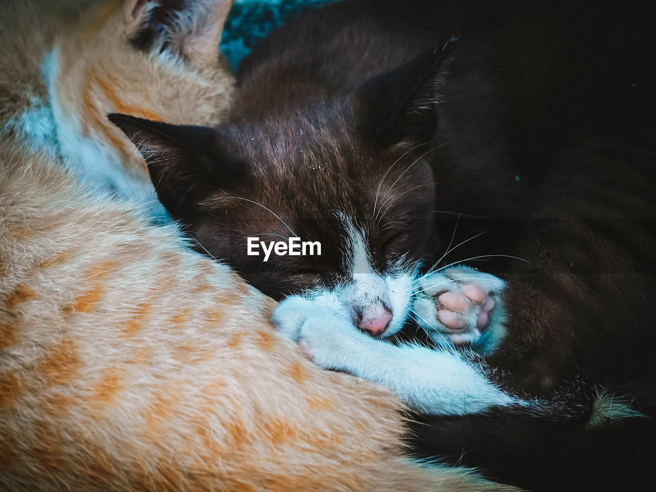 mammal, domestic, pets, domestic animals, animal themes, animal, cat, vertebrate, feline, domestic cat, one animal, relaxation, close-up, indoors, no people, sleeping, bed, lying down, whisker, kitten, animal head, animal family, care