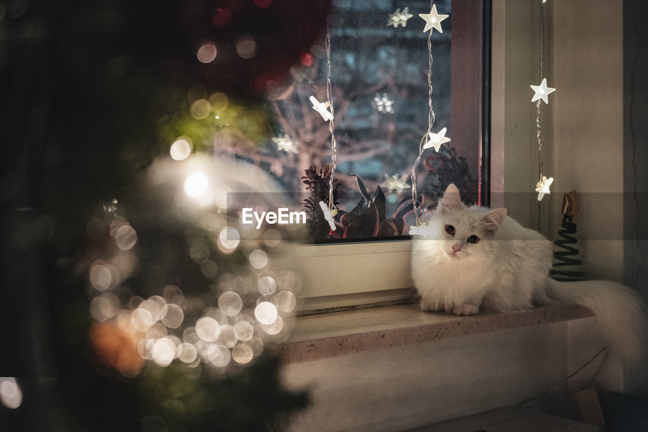 VIEW OF CAT IN ILLUMINATED CHRISTMAS