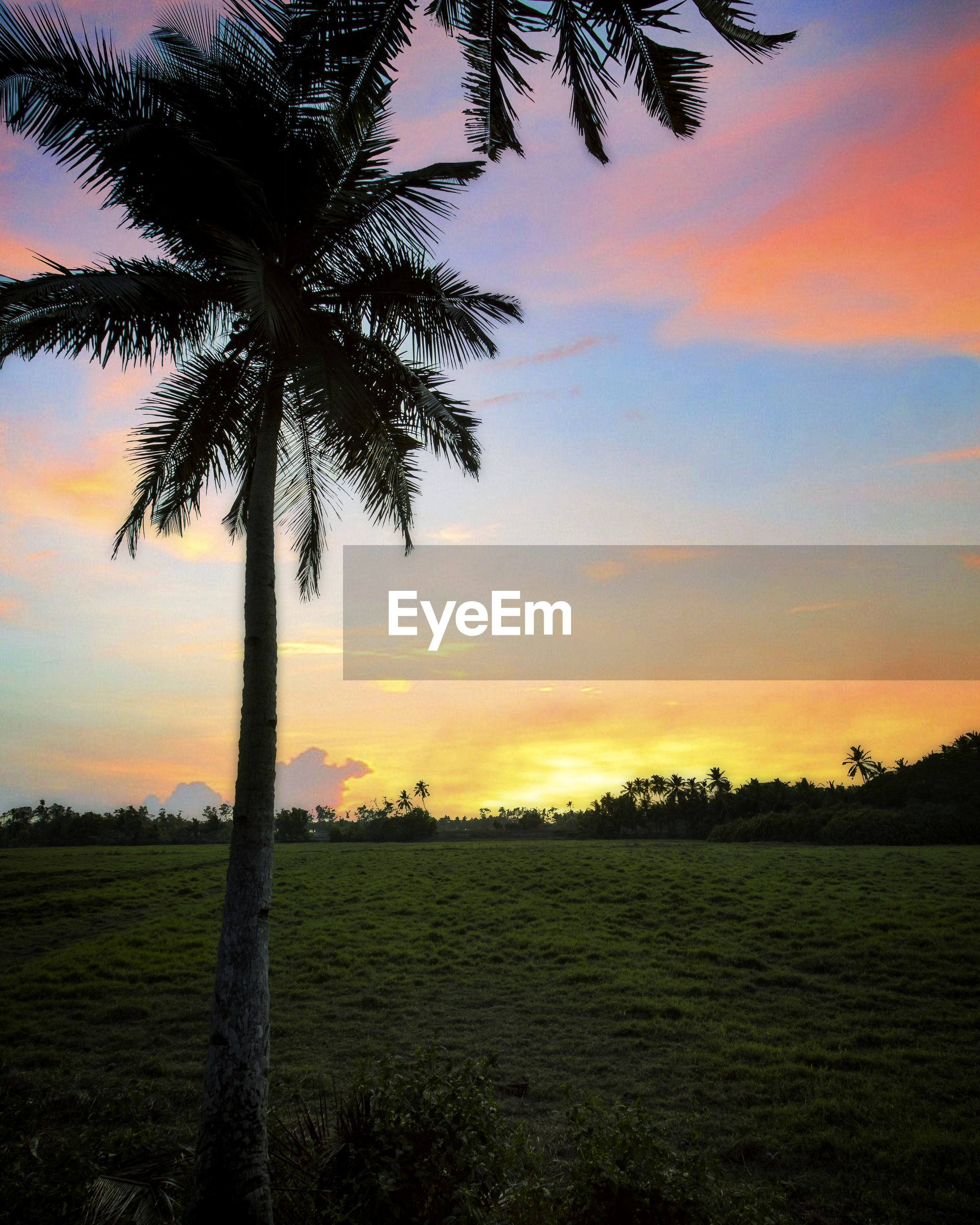 Silhouette palm tree on field against sky during sunset