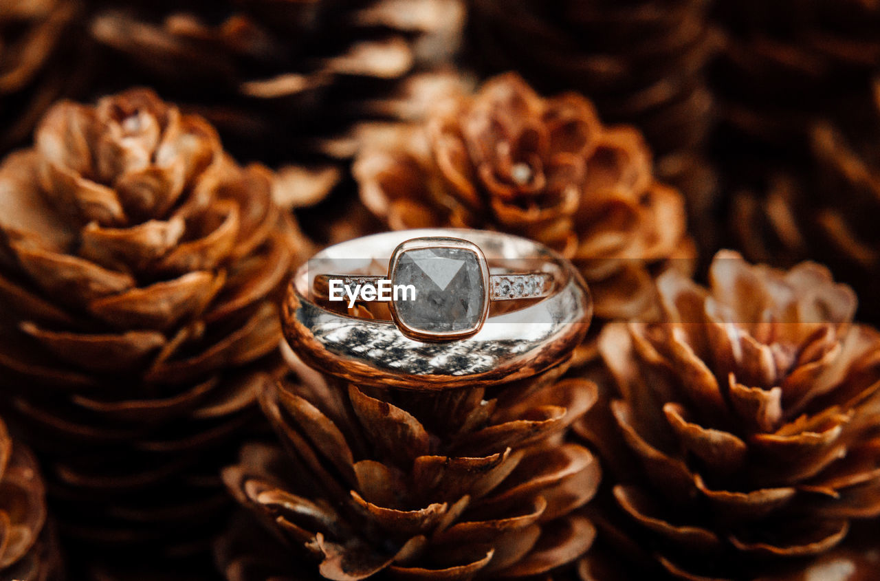 Close-Up Of Wedding Rings On Pine Cone