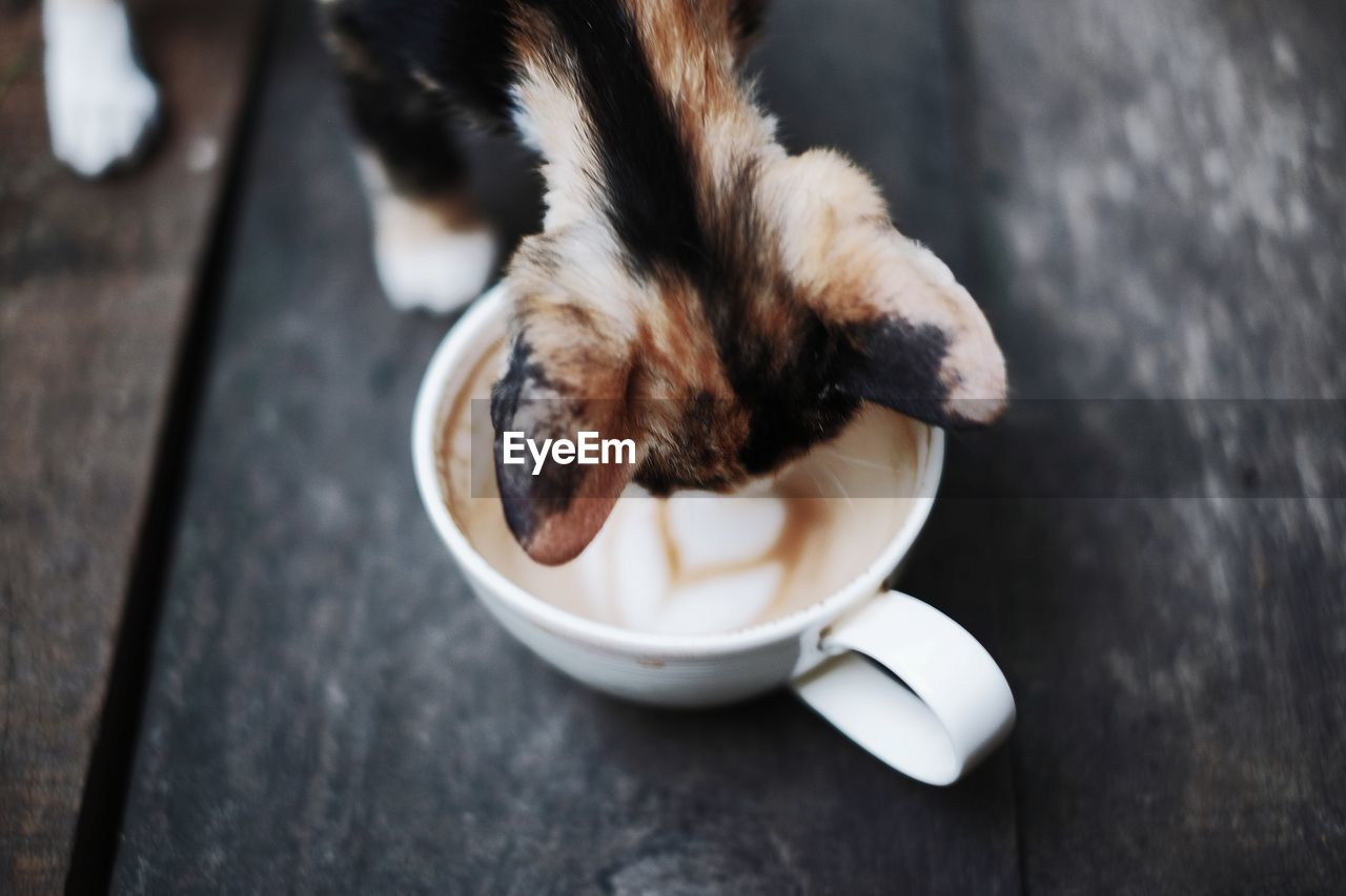 High angle view of cat drinking coffee
