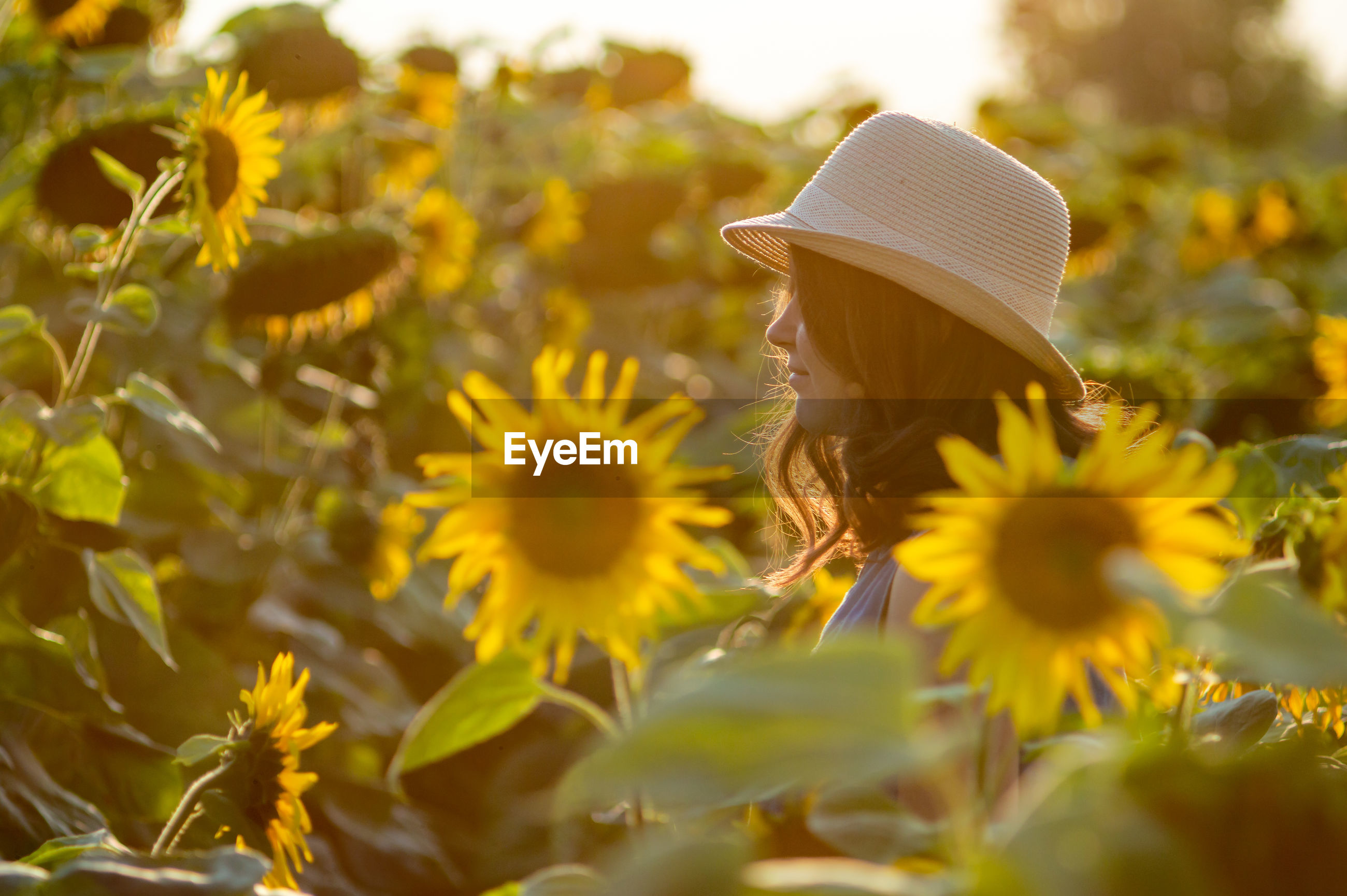 Young woman in sunflower farm