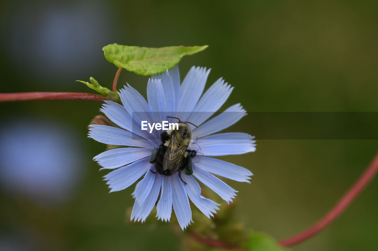 flower, flowering plant, invertebrate, animals in the wild, animal themes, animal, insect, fragility, animal wildlife, plant, beauty in nature, vulnerability, one animal, petal, bee, growth, flower head, freshness, close-up, nature, pollination, purple, no people, pollen
