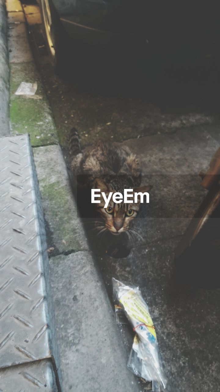 High angle view of cat outdoors