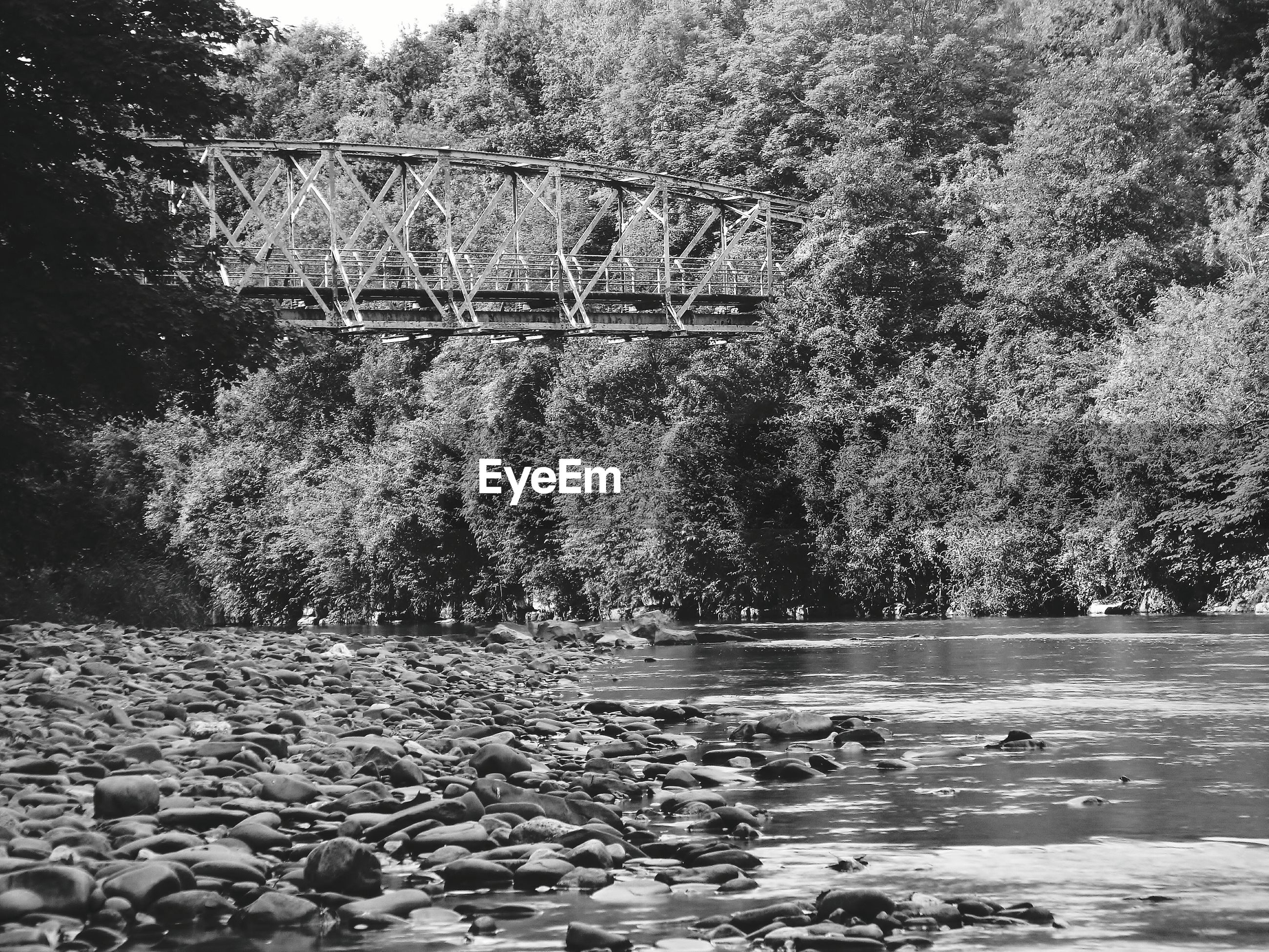 Bridge over pebbles on river amidst trees in forest