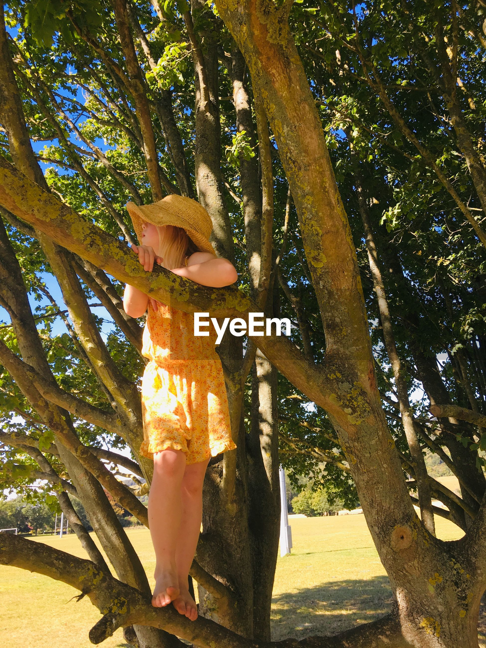 WOMAN STANDING AMIDST TREE TRUNK
