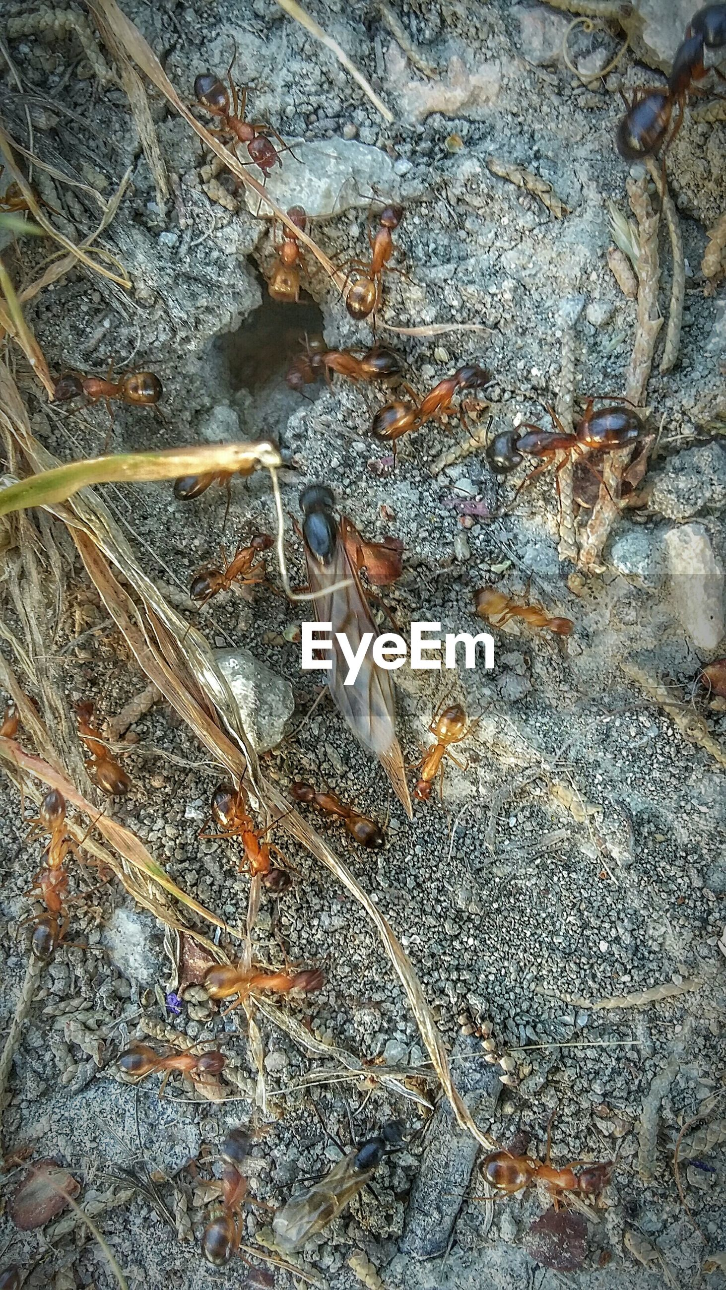 High angle view of ants on field