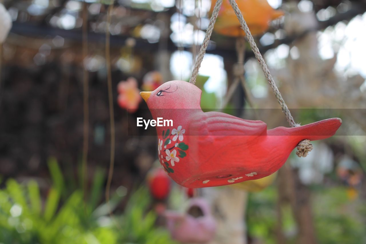 focus on foreground, close-up, animal, plant, animal themes, day, bird, nature, no people, one animal, animal wildlife, red, vertebrate, flowering plant, beauty in nature, growth, flower, outdoors, petal, animals in the wild