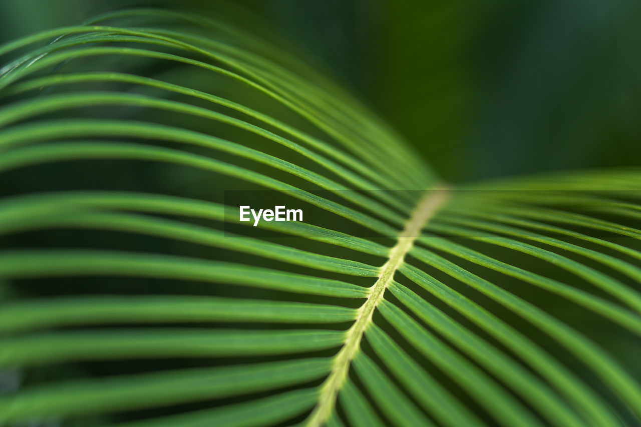 green color, leaf, plant part, growth, close-up, pattern, natural pattern, plant, frond, beauty in nature, palm leaf, palm tree, selective focus, nature, no people, full frame, textured, day, backgrounds, outdoors, leaves, rainforest