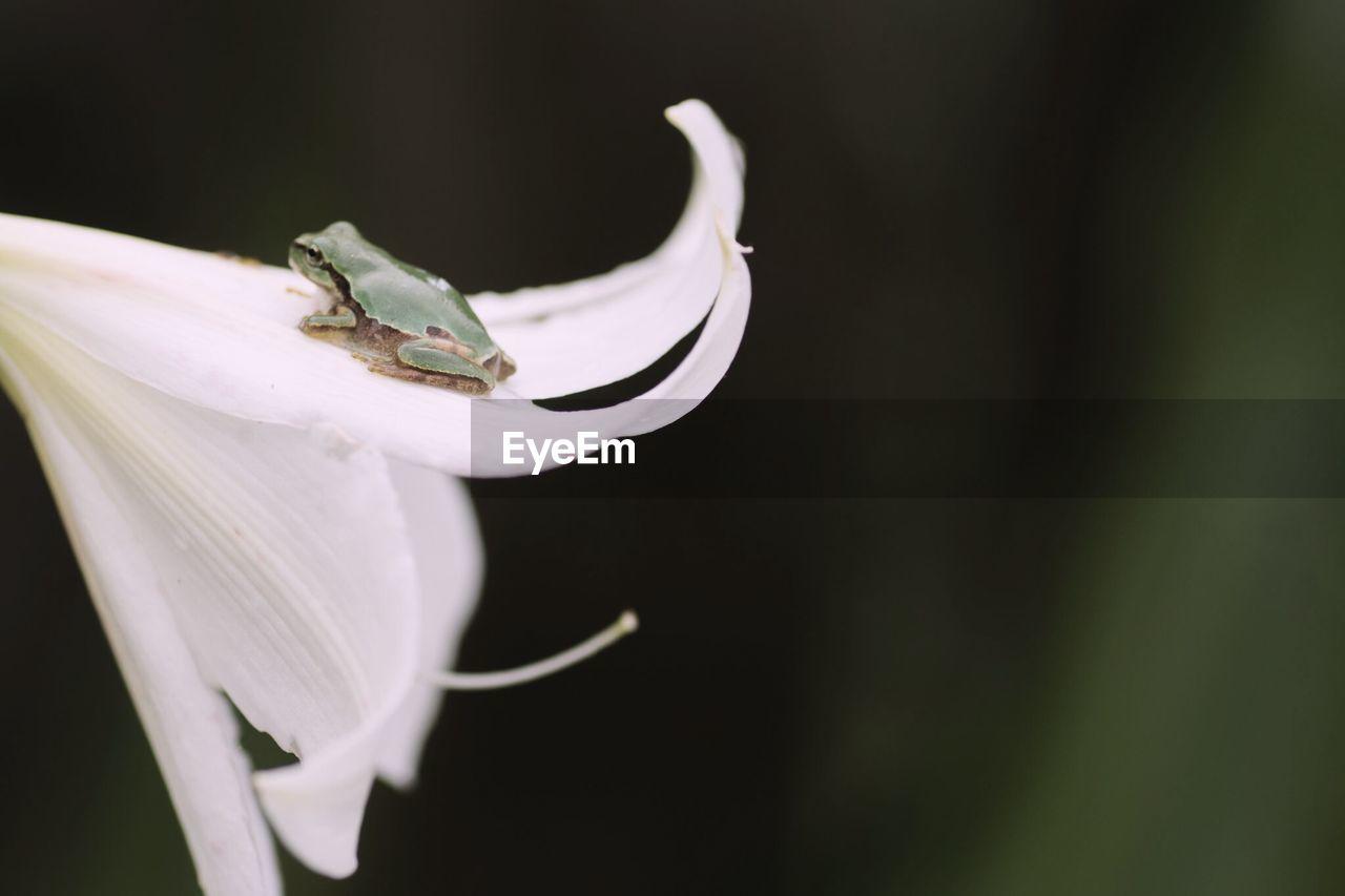 Frog On White Flower