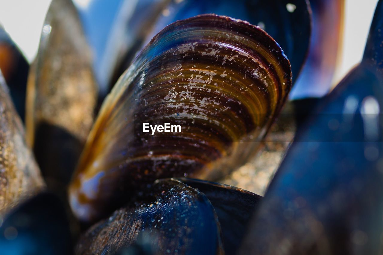 Extreme Close-Up Of Mussels