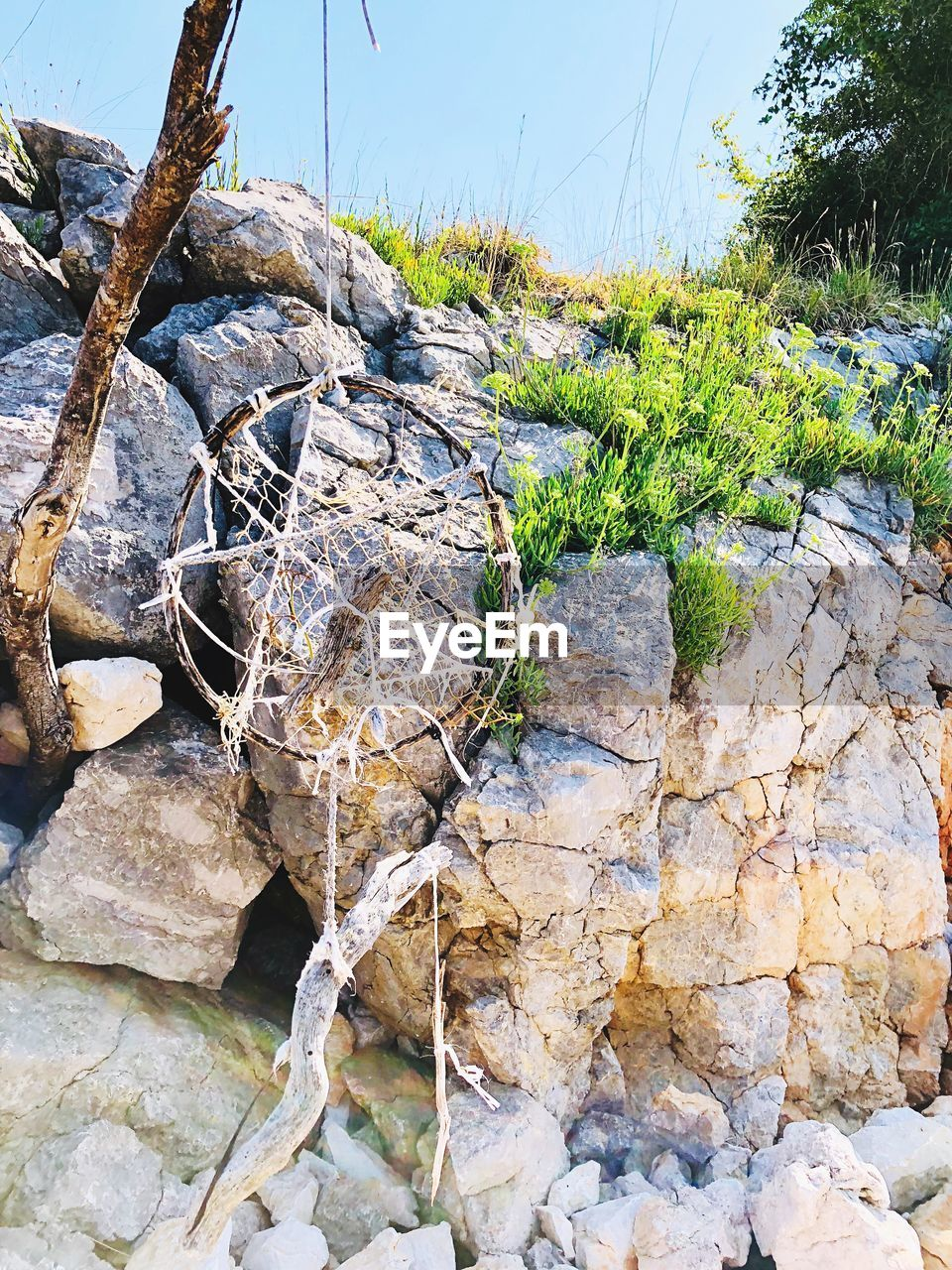 rock, solid, plant, rock - object, nature, day, no people, tree, tranquility, textured, outdoors, stone - object, close-up, growth, land, beauty in nature, focus on foreground, forest, rough, rock formation, stone wall
