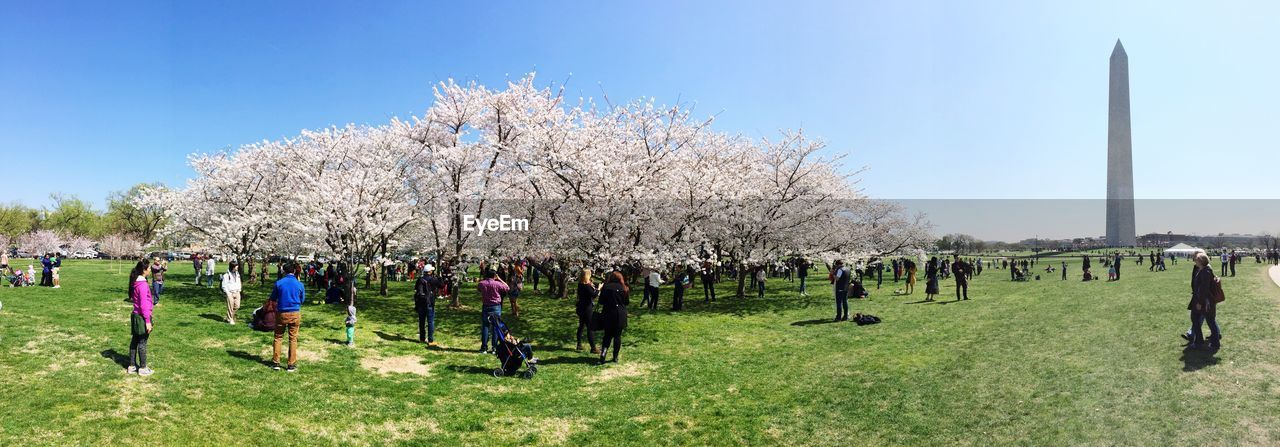 People by flowering tree at park with washington monument against sky
