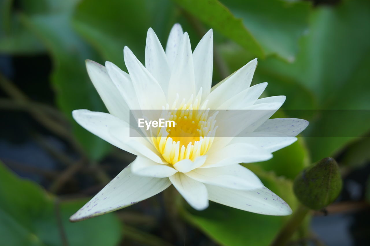 flowering plant, flower, fragility, vulnerability, plant, beauty in nature, freshness, growth, petal, flower head, inflorescence, close-up, white color, nature, focus on foreground, yellow, day, leaf, no people, pollen, softness