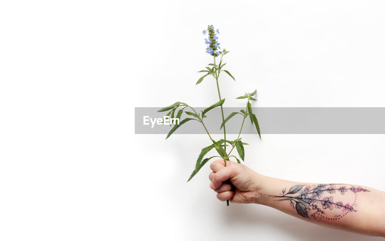 Close-up of man holding plant over white background