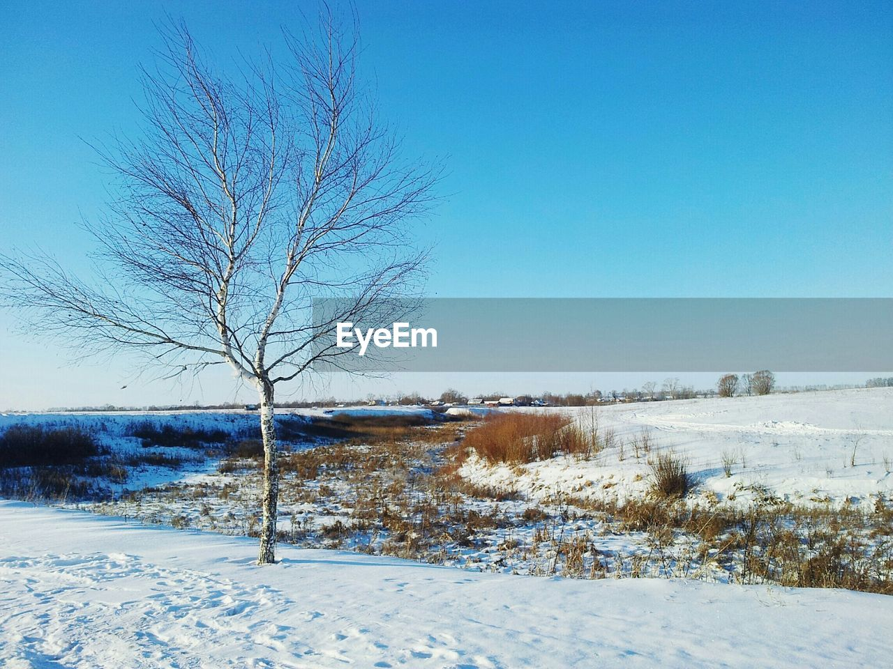 winter, bare tree, cold temperature, snow, tranquil scene, tranquility, white, scenics, landscape, nature, blue, beauty in nature, solitude, white color, clear sky, no people, tree, day, outdoors, branch, sky