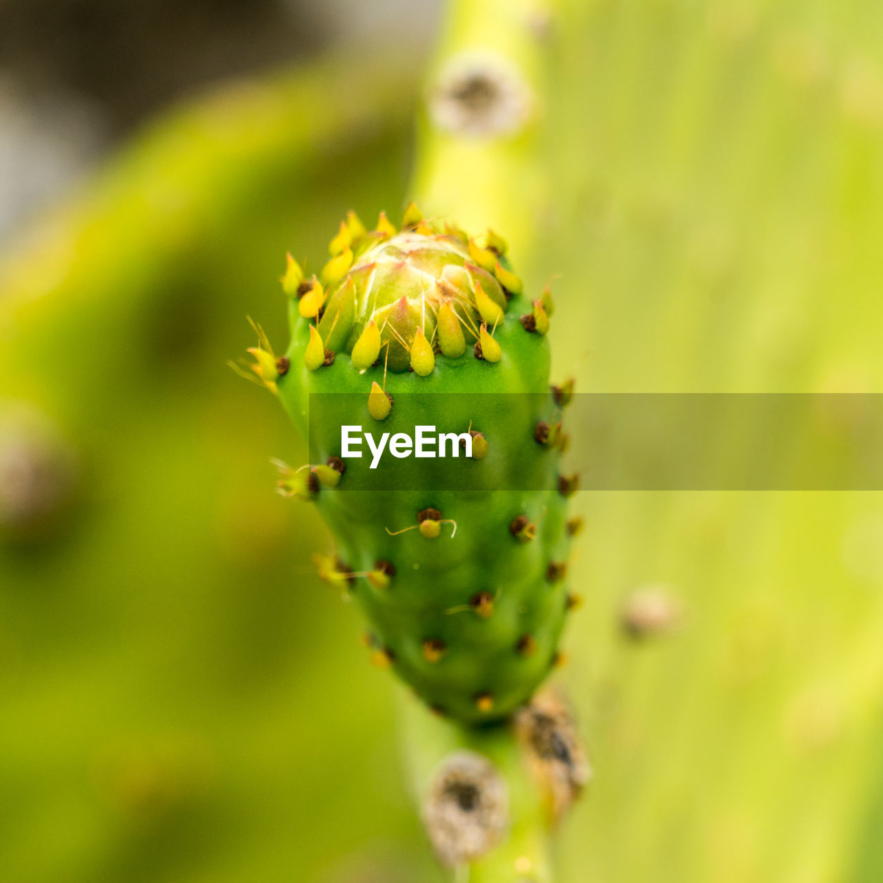 green color, plant, growth, close-up, beauty in nature, nature, no people, flower, day, focus on foreground, cactus, selective focus, succulent plant, freshness, outdoors, flowering plant, bud, beginnings, spiked, thorn