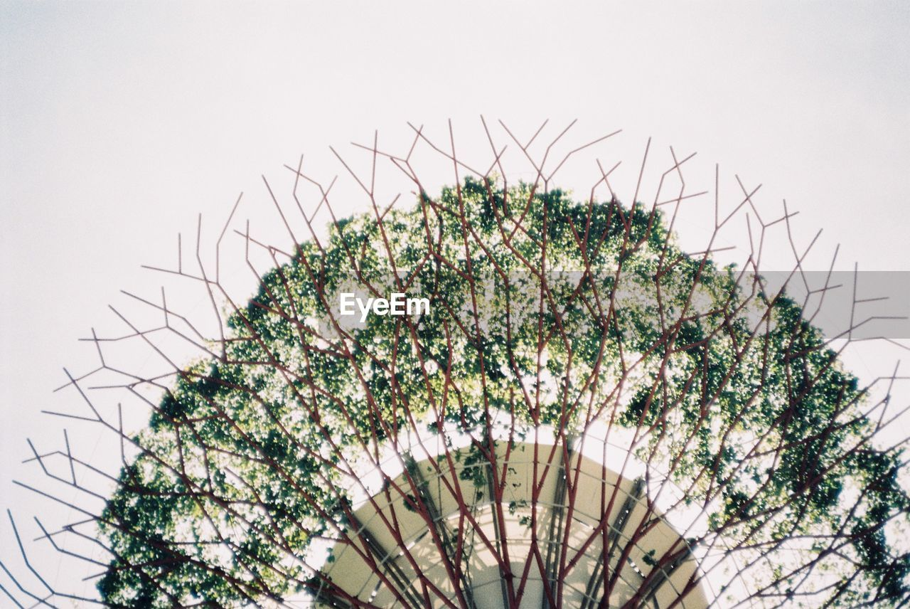 growth, low angle view, clear sky, no people, plant, day, flower, outdoors, nature, tree, sky, beauty in nature, freshness, fragility, close-up