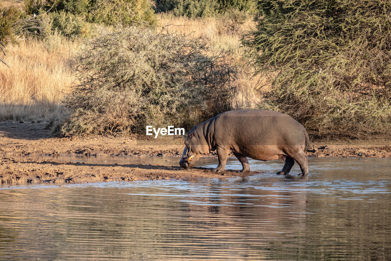 VIEW OF HORSE DRINKING WATER FROM GLASS