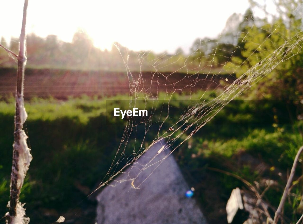 spider web, focus on foreground, web, nature, spider, close-up, no people, day, outdoors, one animal, fragility, insect, trapped, animal themes, beauty in nature, plant, freshness