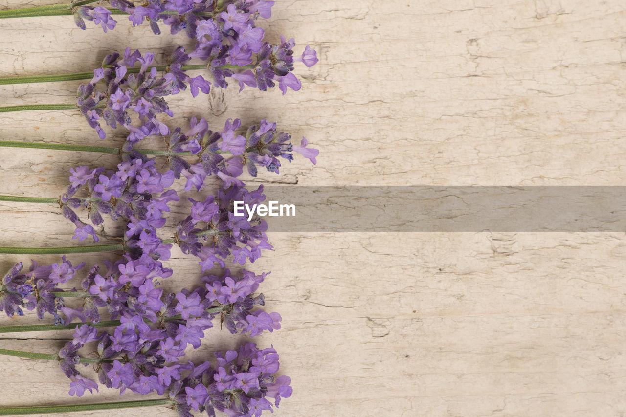 CLOSE-UP OF PURPLE FLOWERING PLANTS ON WOOD
