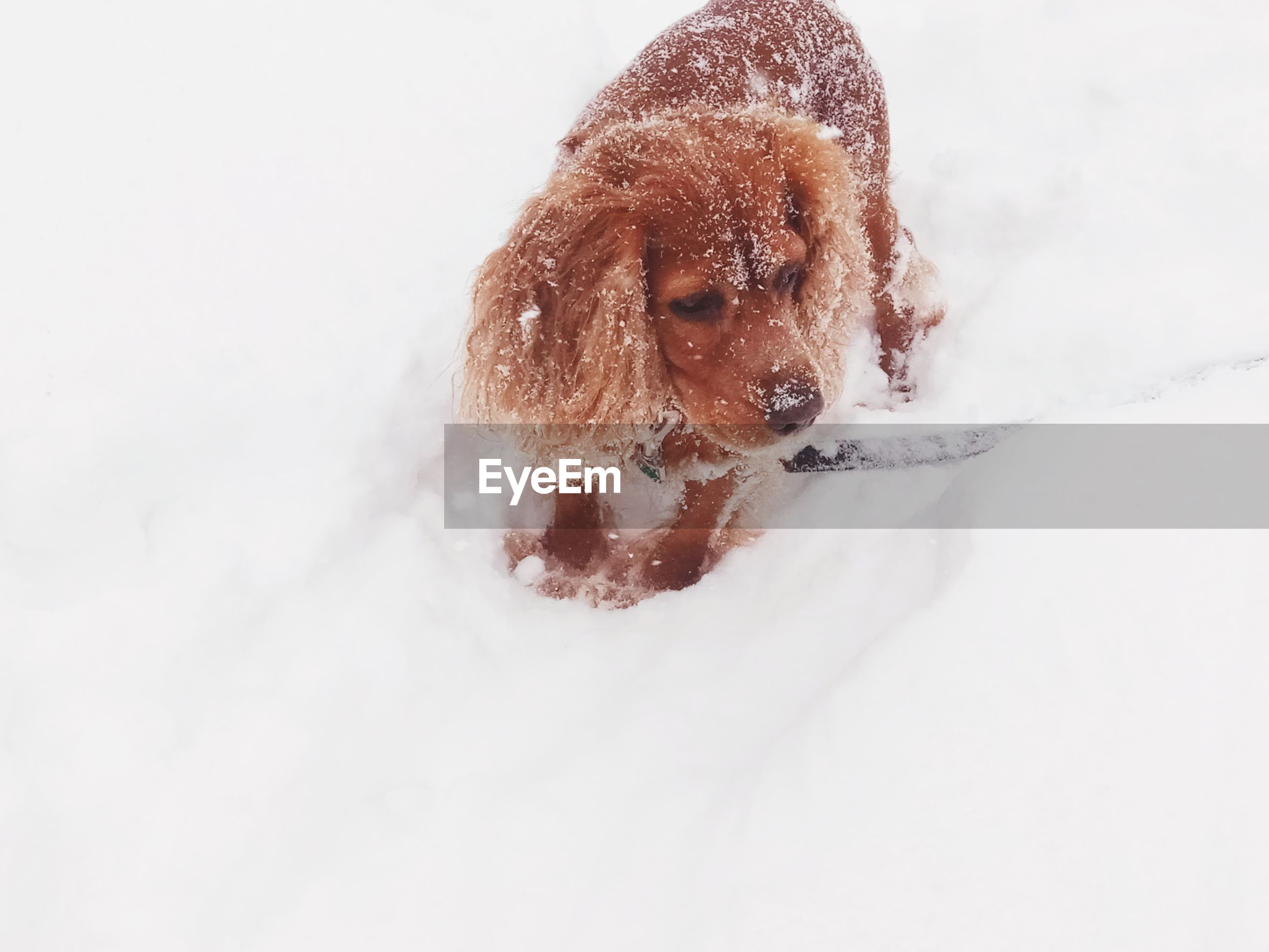 DOG IN SNOW ON FIELD