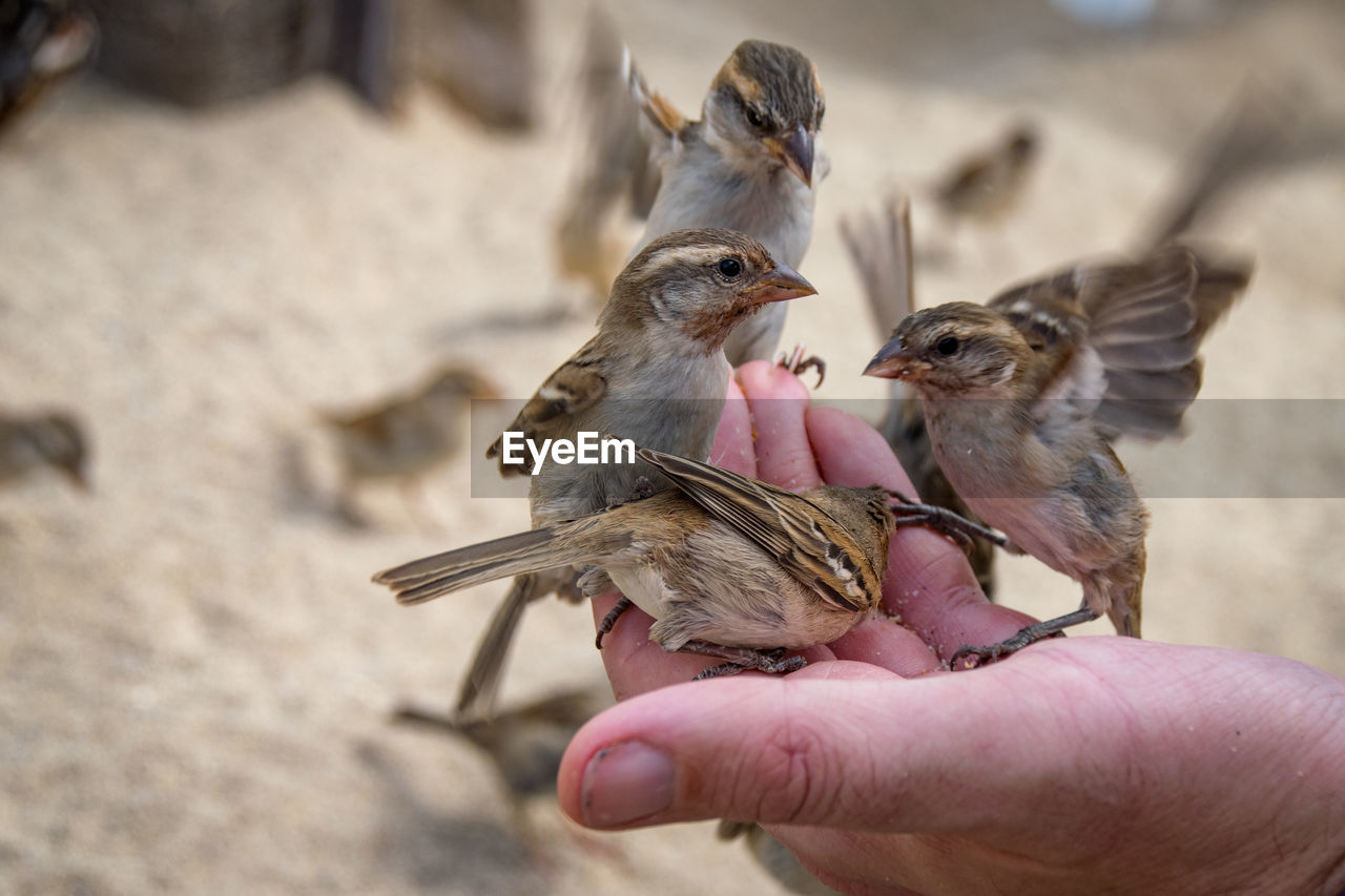 vertebrate, human hand, hand, group of animals, human body part, one person, feeding, real people, holding, bird, animal wildlife, focus on foreground, animals in the wild, young animal, day, eating, young bird, finger, body part, outdoors, care, mouth open, human limb