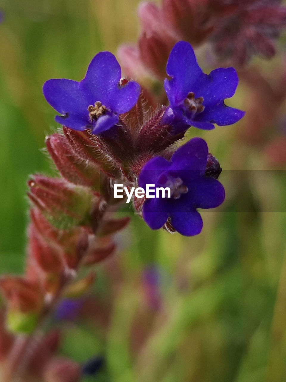flowering plant, flower, plant, beauty in nature, vulnerability, growth, fragility, close-up, freshness, purple, petal, inflorescence, nature, flower head, focus on foreground, no people, selective focus, day, outdoors, botany