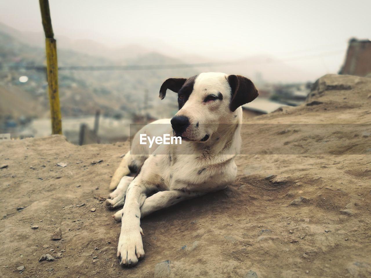 CLOSE-UP PORTRAIT OF DOG LYING ON DIRT