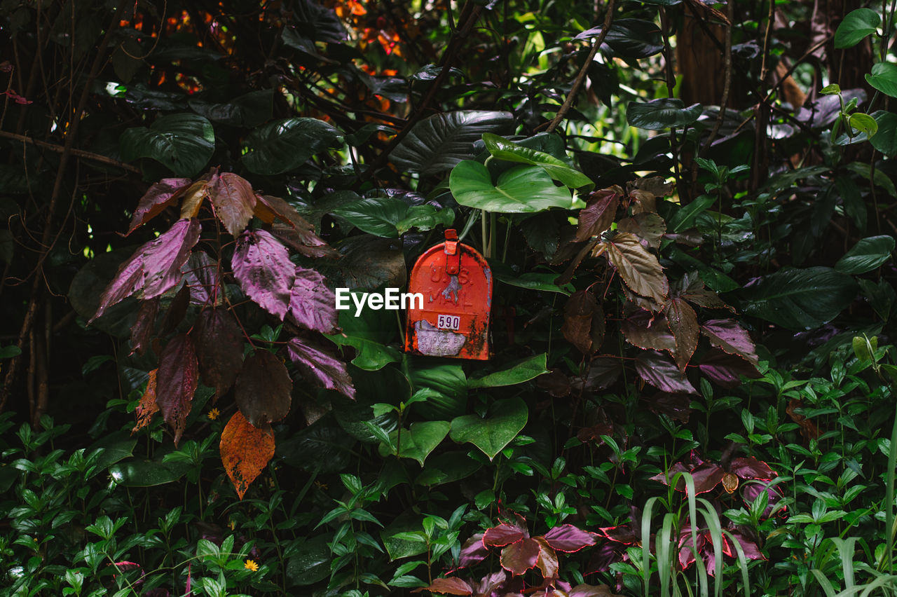 Numbered object amidst plants