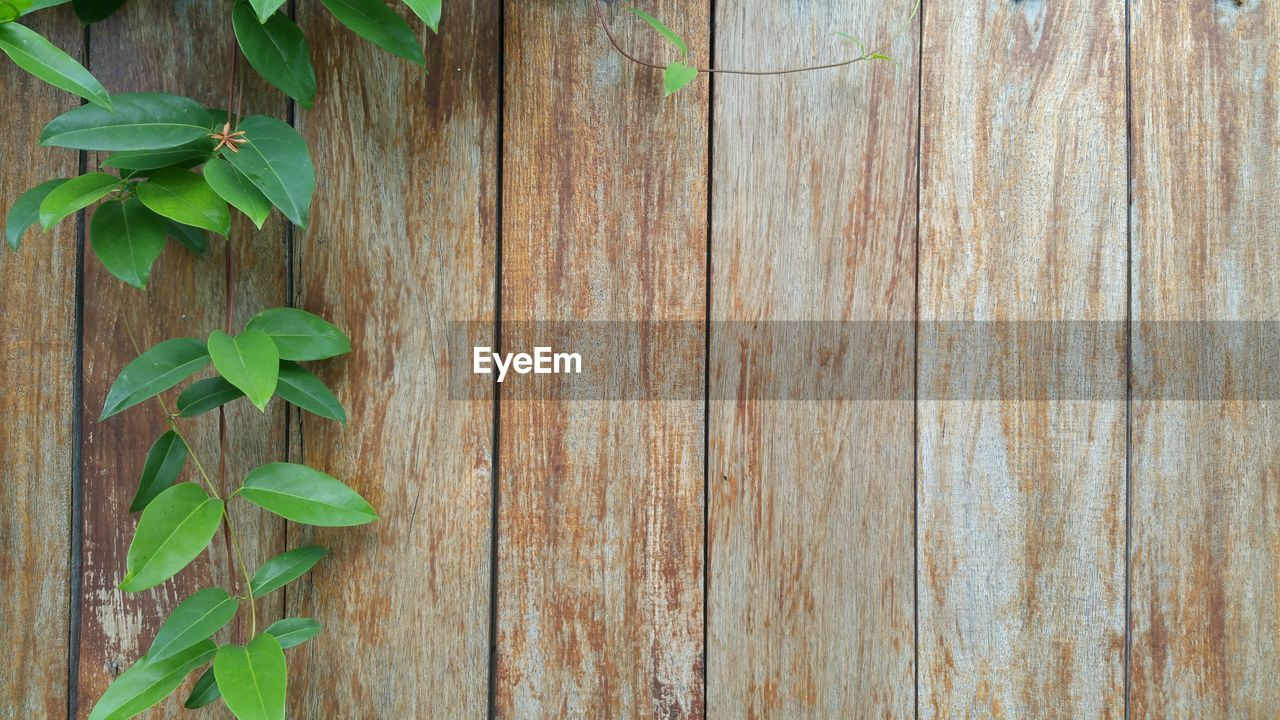 leaf, plant, growth, green color, nature, ivy, no people, wood - material, close-up, outdoors, fragility, day, beauty in nature, freshness
