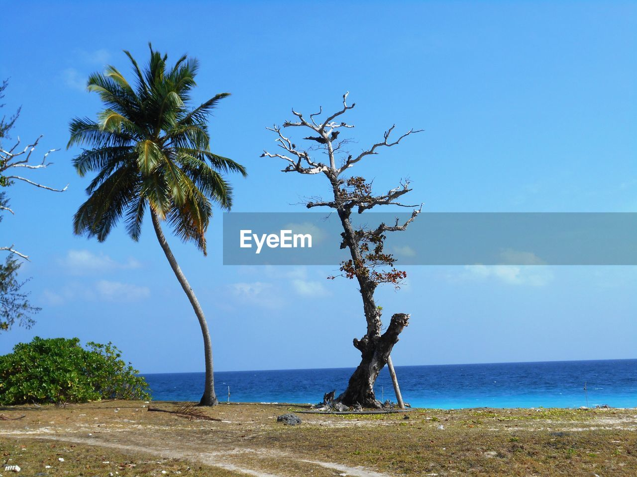 sky, tree, water, sea, plant, scenics - nature, horizon, horizon over water, beauty in nature, tranquil scene, land, tranquility, beach, tropical climate, nature, growth, palm tree, day, blue, no people, outdoors, coconut palm tree