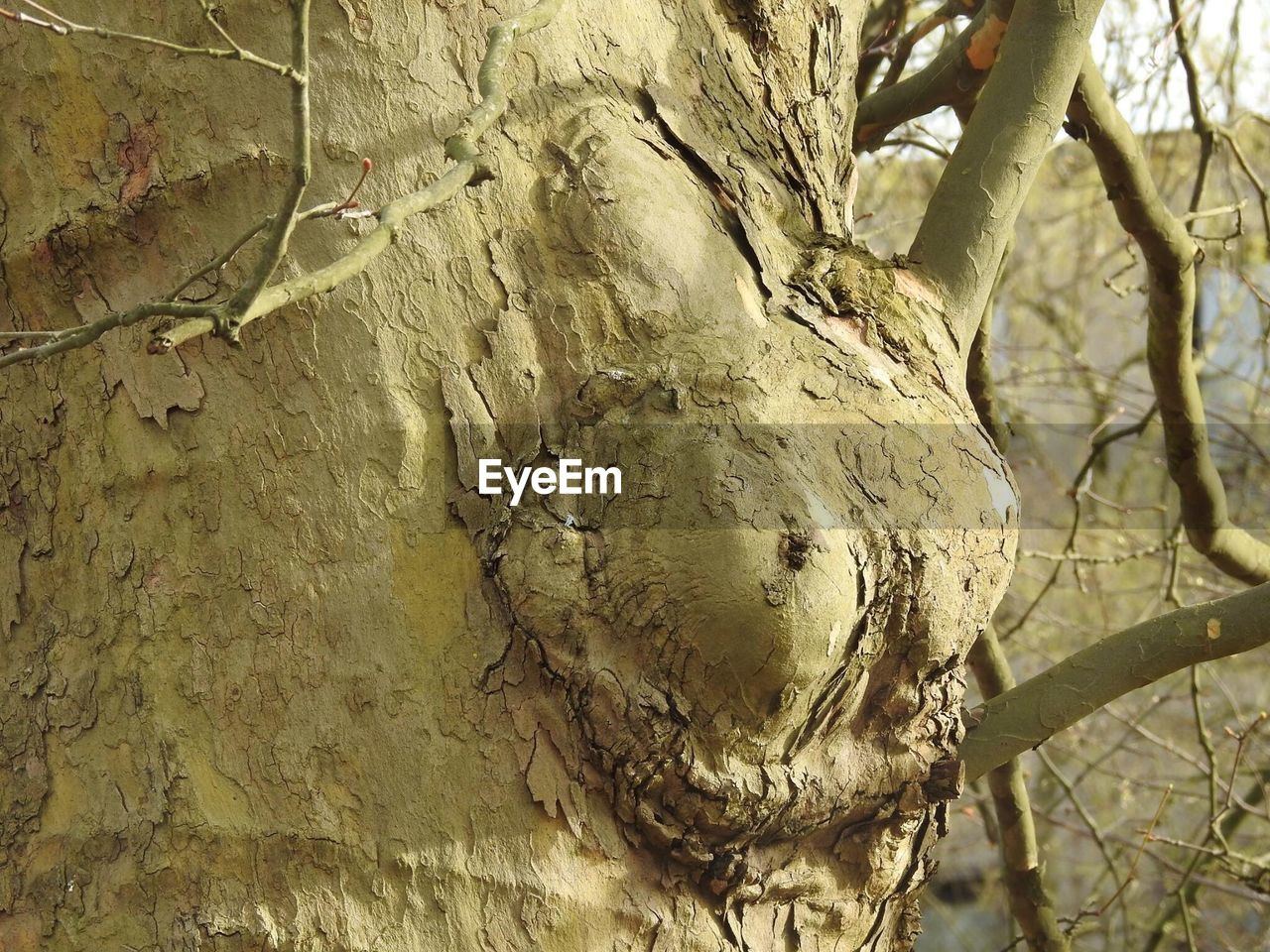 tree, tree trunk, branch, no people, close-up, day, outdoors, nature, textured, animal themes