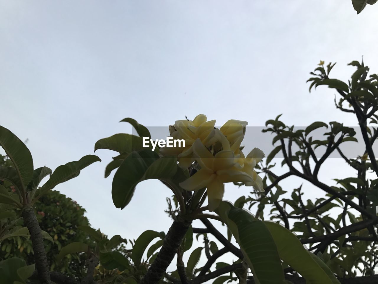 flower, petal, leaf, growth, freshness, low angle view, fragility, nature, plant, beauty in nature, tree, day, flower head, no people, sky, outdoors, clear sky, branch, close-up, blooming