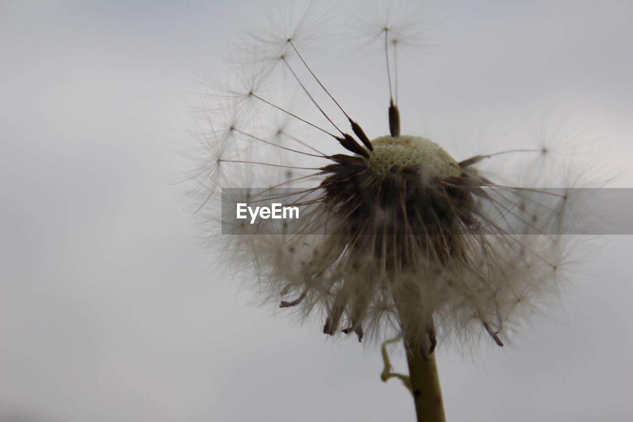 flower, dandelion, fragility, close-up, nature, flower head, plant, freshness, focus on foreground, growth, beauty in nature, outdoors, day, no people, sky
