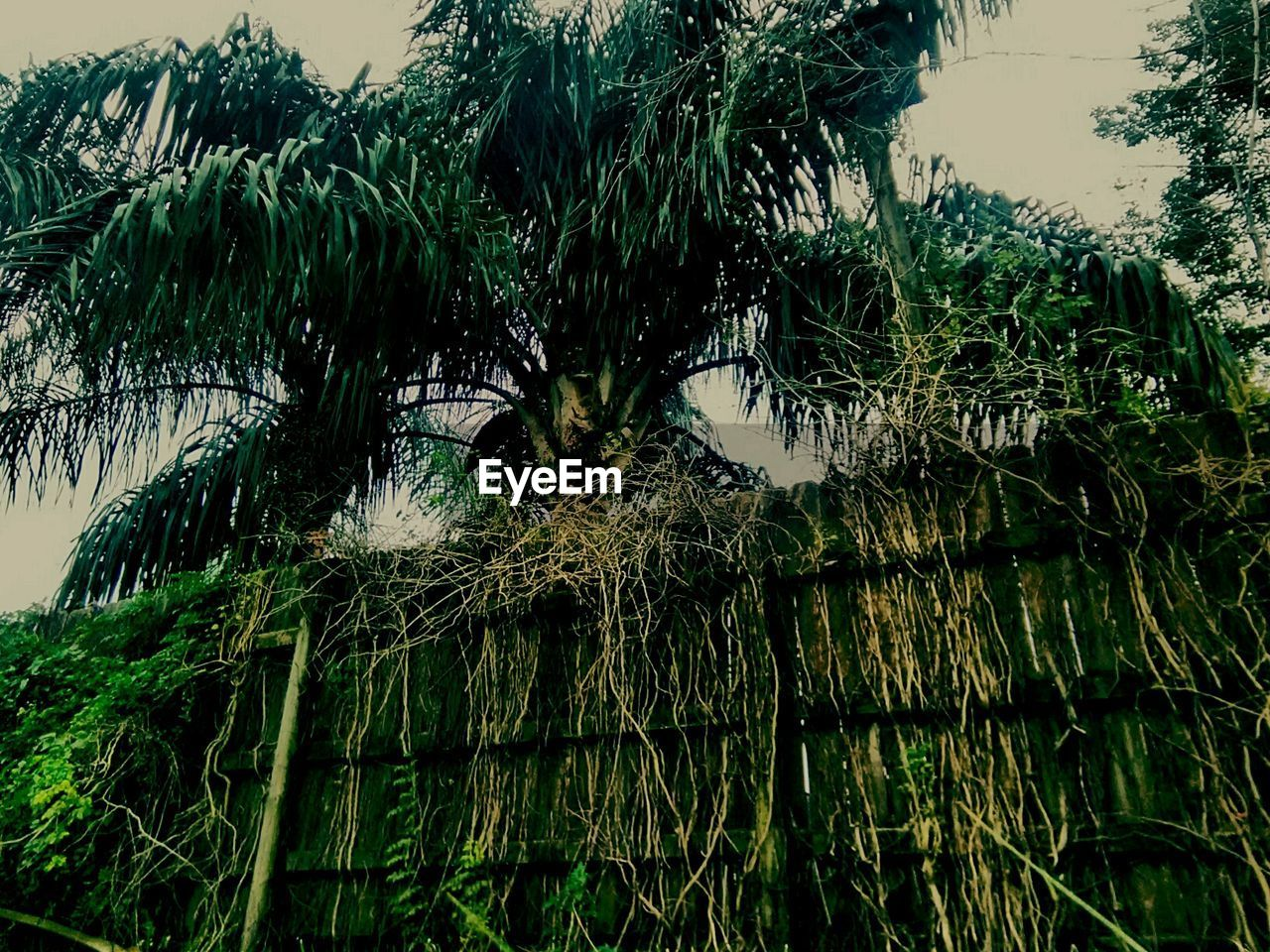 growth, tree, nature, outdoors, no people, day, water, green color, plant, tranquility, grass, palm tree, beauty in nature, scenics, sky, close-up