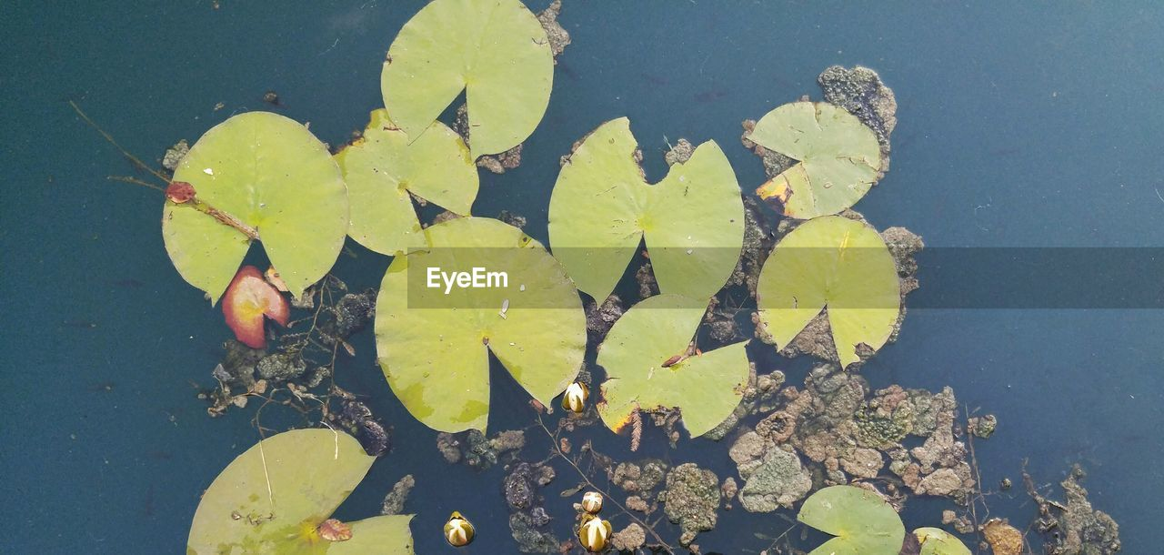 High Angle View Of Water Lily Plants Growing In Lake