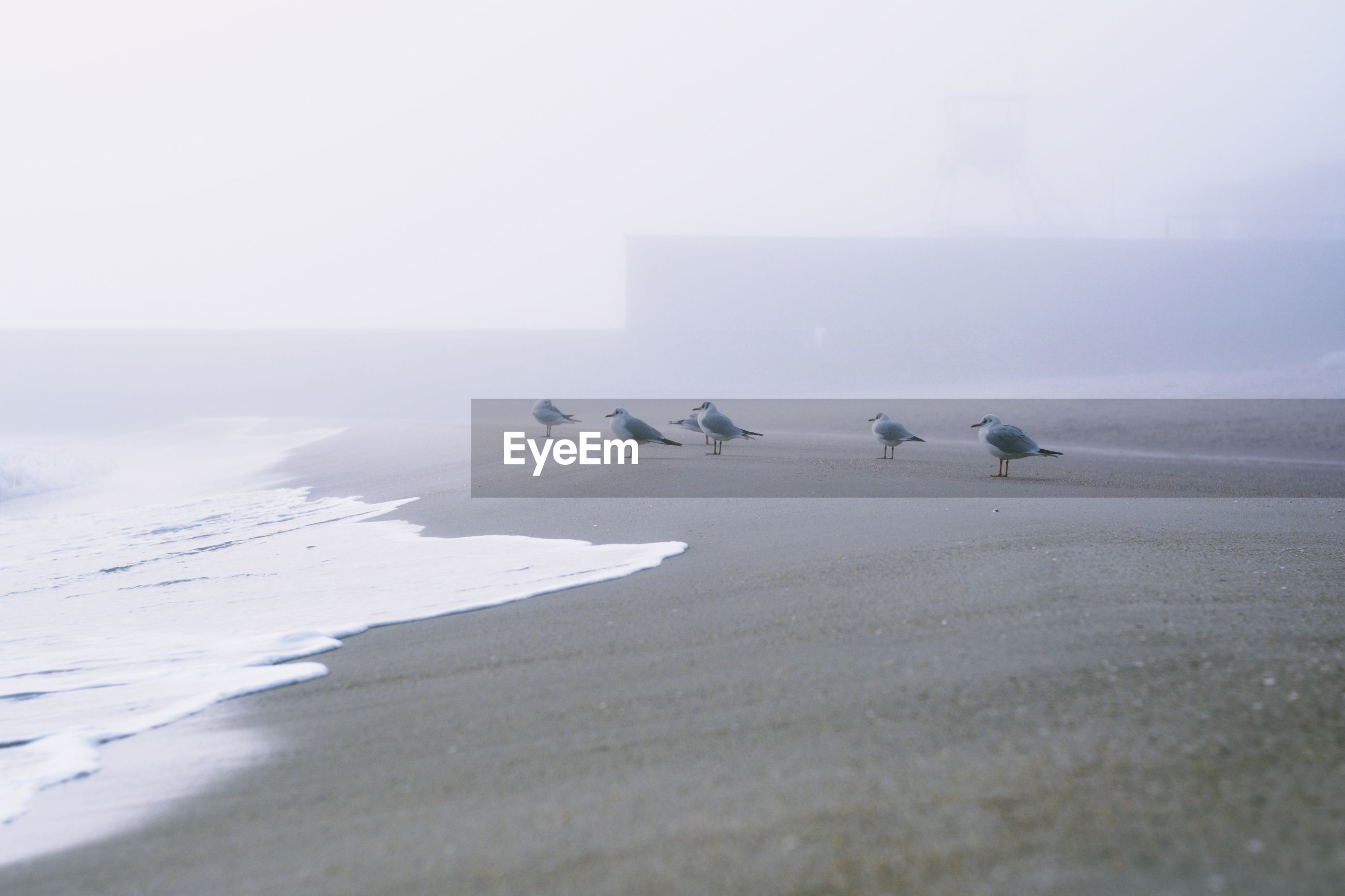 Seagulls on beach in the fog