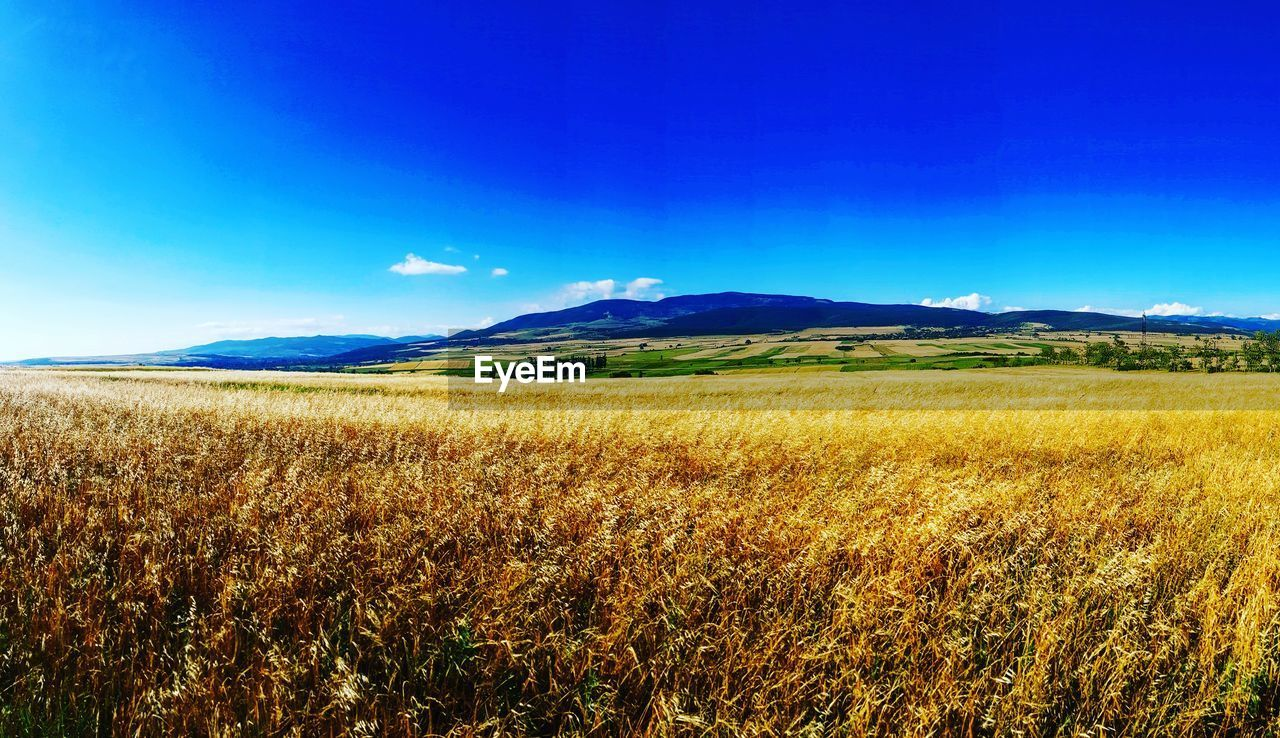landscape, field, nature, agriculture, rural scene, tranquil scene, scenics, blue, beauty in nature, summer, no people, outdoors, sky, tranquility, cereal plant, mountain, grass, growth, day
