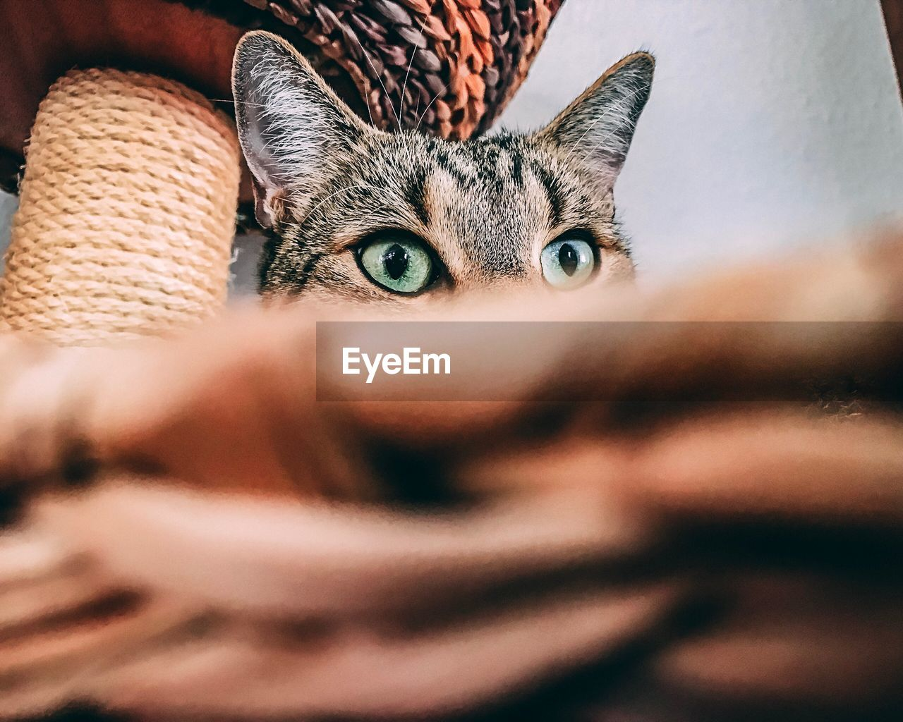 one animal, animal themes, selective focus, pets, domestic cat, looking at camera, portrait, mammal, indoors, domestic animals, animal head, feline, close-up, no people, day